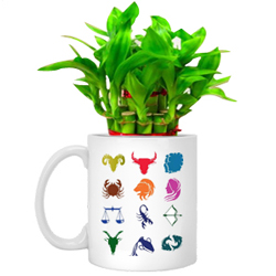 Wonderful Arrangement of Lucky Bamboo in Sunsign Mug