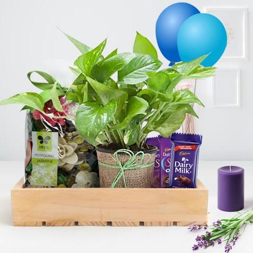 Wonderful Money Plant with Potpourri, Scented Candles n Chocolates Gift