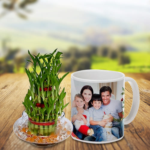 Breathtaking 3 Layered Lucky Bamboo Trivia in a Personalized Coffee Mug
