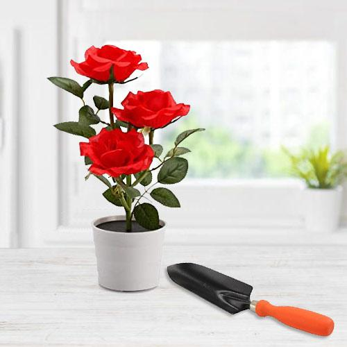 Botanical Selection of Red Rose Plant with Small Trowel