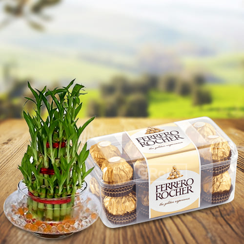 Impressive Combo of 2 Tier Lucky Bamboo Stalks in Glass Pot with Ferrero Rocher Chocolates