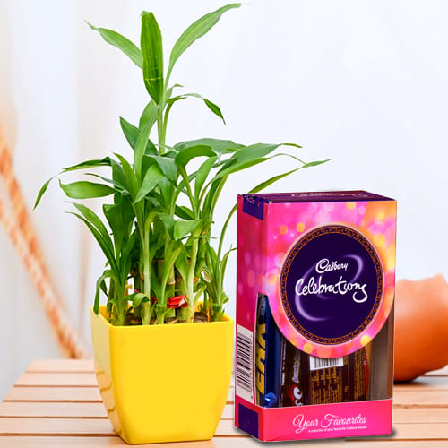 Enchanting Good Luck 2 Tier Bamboo Plant with Chocolates