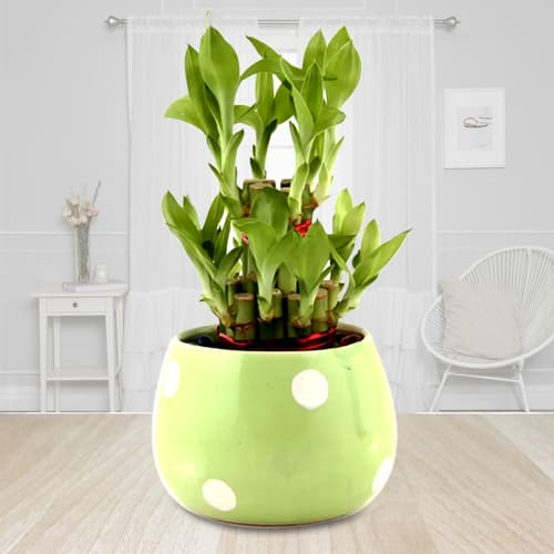 Decorative 2 Tier Bamboo Plant in a Ceramic Pot