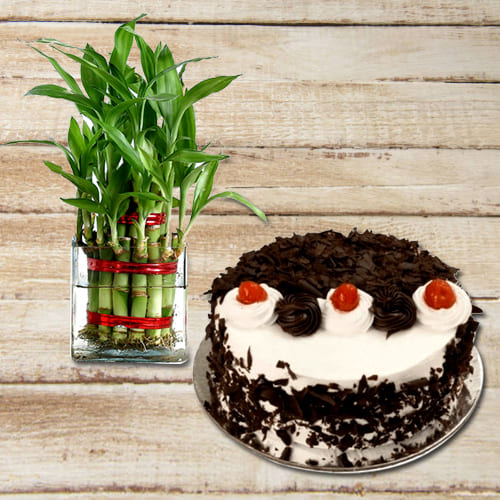 Fast-Growing 2 Layer Lush Green Bamboo Plant in a Glass Pot with Black Forest Cake